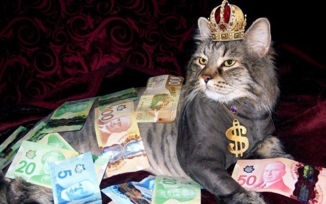 """PKO BP chciał być jak Revolut, ale coś poszło nie tak. Karta wielowalutowa, lecz rozliczana jak złotowa. Bank: """"bo taki mamy regulamin"""""""