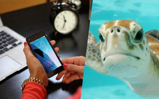 """Domowy internet mobilny wolny jak żółw. Czytelniczka robi testy prędkości. Co telekom na to? """"Doceniamy, ale to na nic"""""""