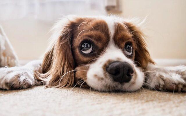 Ubezpieczenie dla psa i kota – święty spokój czy tylko wysoka kwota? Sprawdzamy, czy warto kupić polisy dla naszych czworonogich przyjaciół