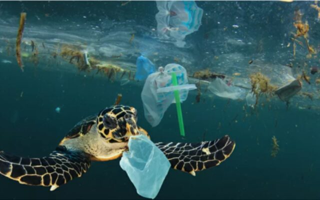Dbanie o środowisko czy zwykła ekościema? Jak odróżnić prawdziwą ekologię od tej na pokaz? Zobacz jakie błędy najczęściej popełniasz na drodze do bycia eko