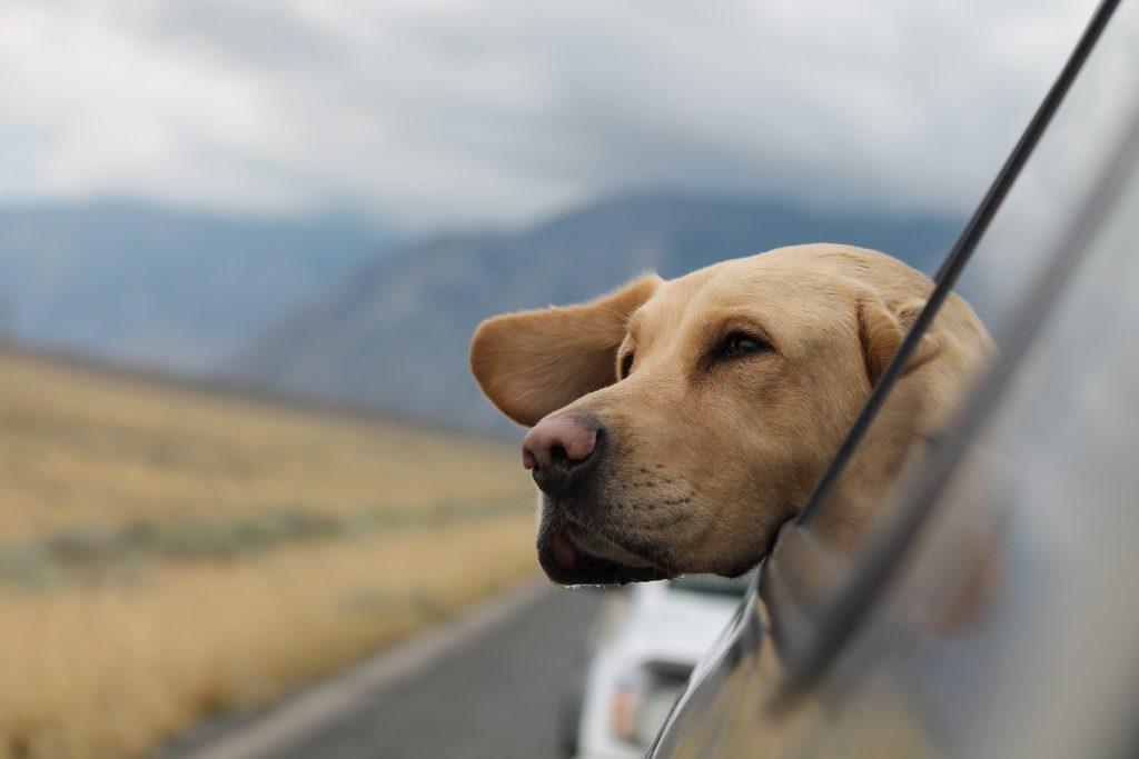 Ubezpieczenie psa i kota na wakacje? Pojawiły się aplikacje, w których można je kupić w ciągu kilku minut. Sprawdzam, czy warto
